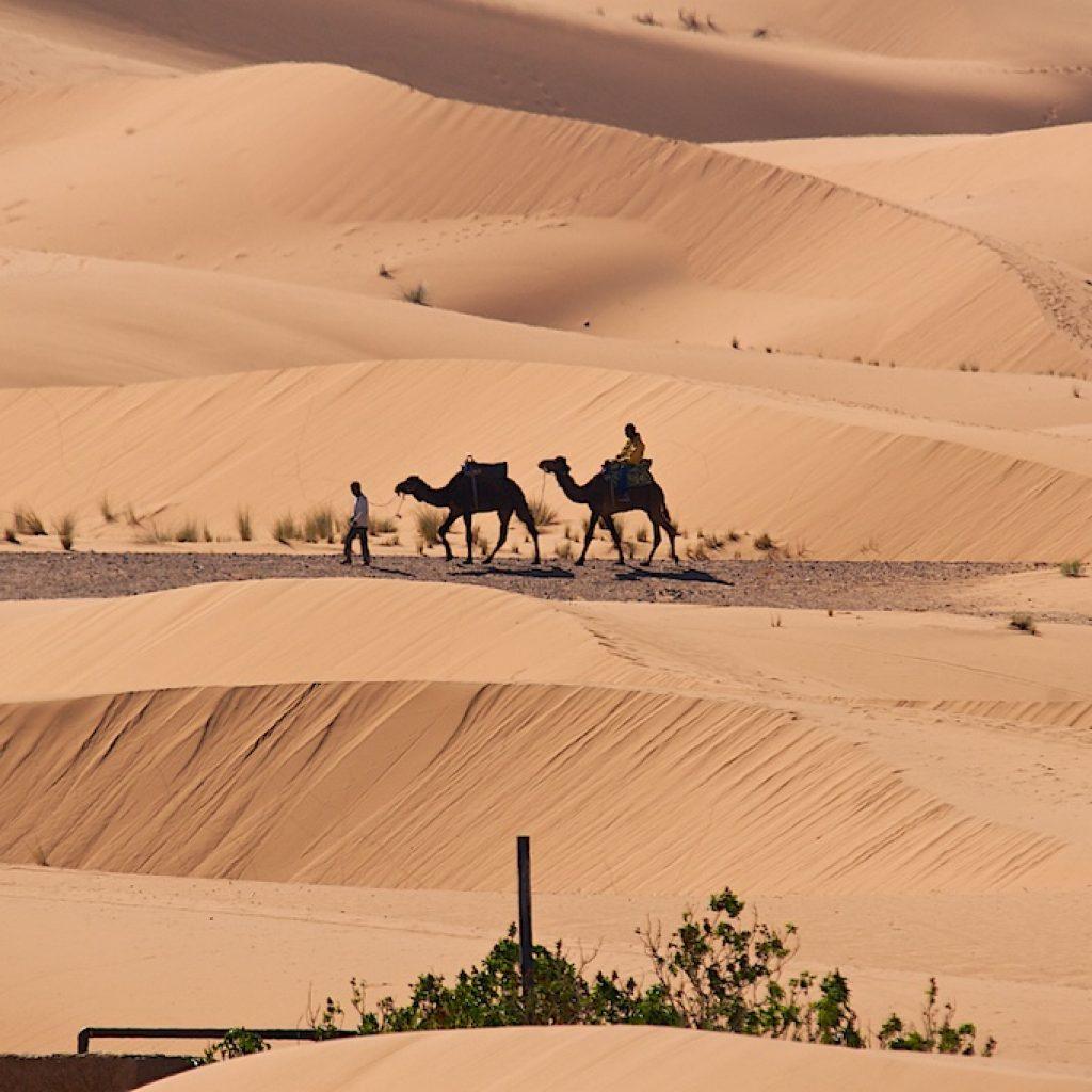 Kamelen woestijn Marokko