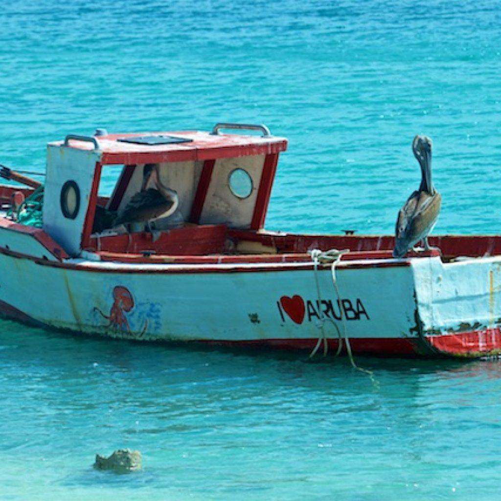 Pelikanen Aruba