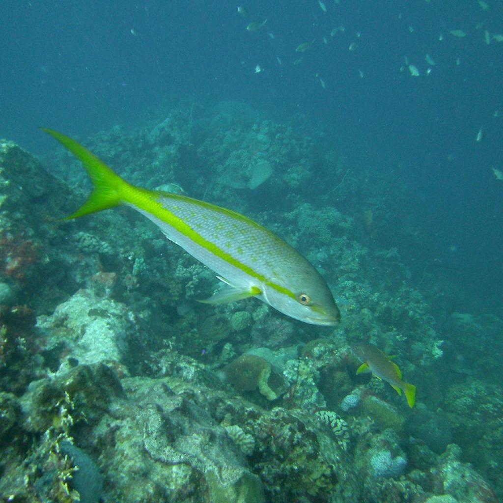 Vissen op Bonaire