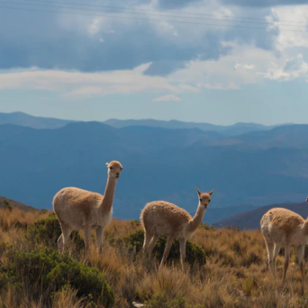 Serranía de Hornocal, Mountain of fourteen colors, Quebrada de Humahuaca , Humahuaca, Argentina