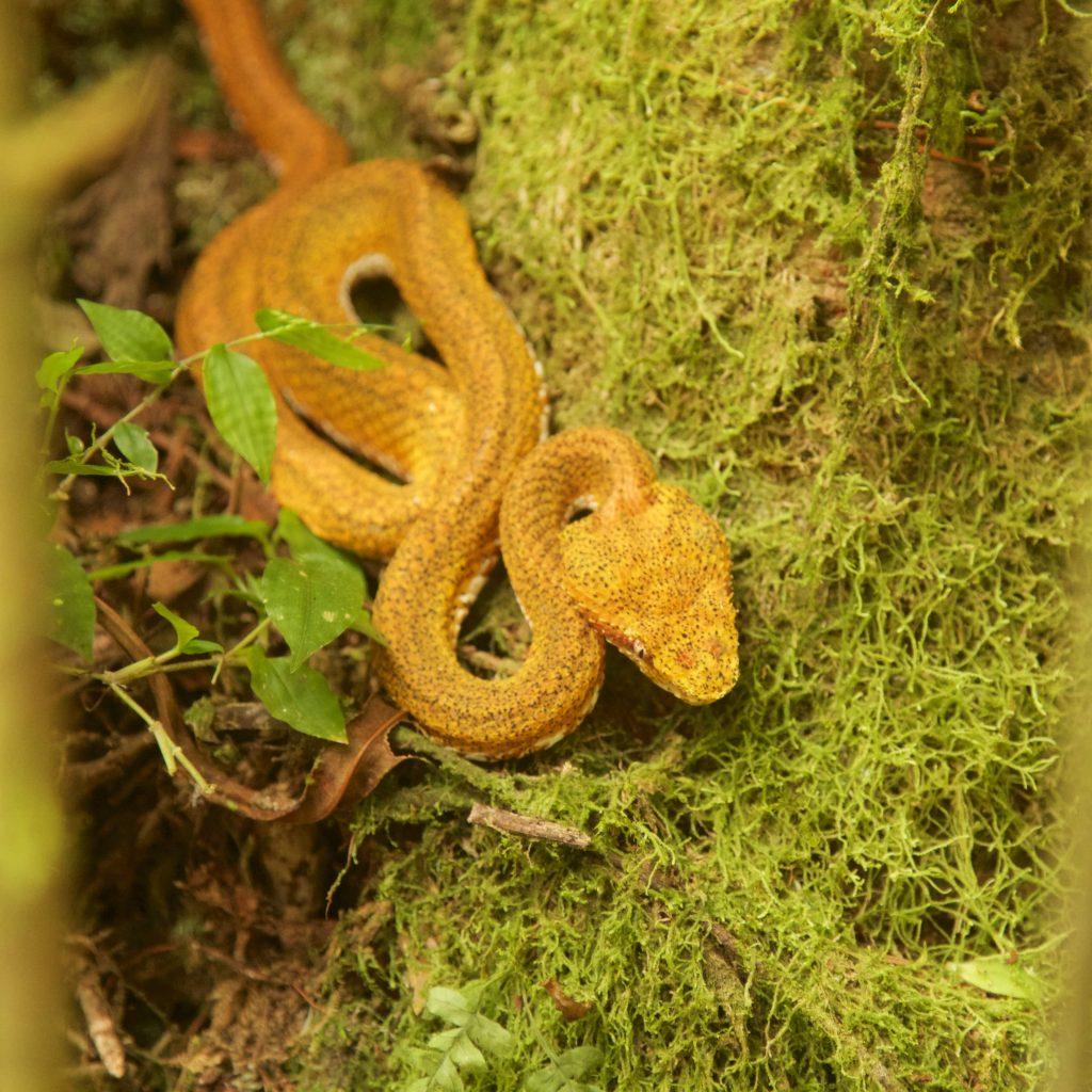 slang Costa Rica